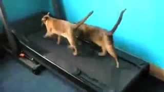 Забавные и смешные кошки. Приколы котэ