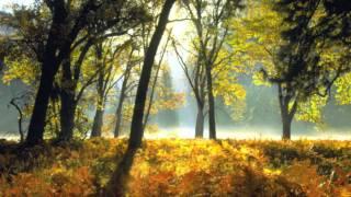 Jason Van Wyk - Dream On (Protoculture Remix)