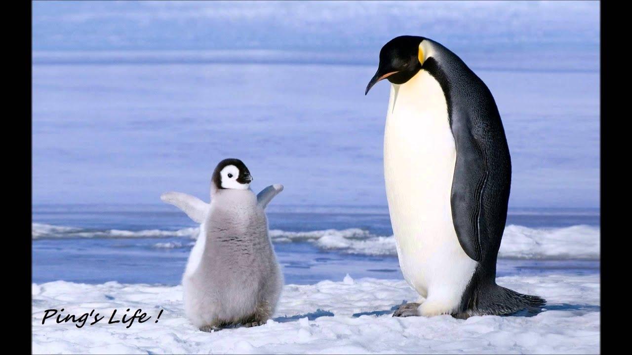 gryxslow j 39 suis qu 39 un pingouin cover youtube. Black Bedroom Furniture Sets. Home Design Ideas