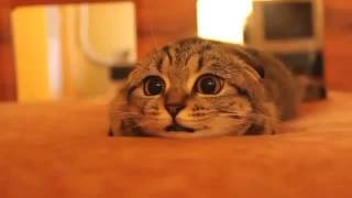 Котей   Милота HD 720 Приколы Животные Кошка Кошак Котэ Жесть Ржач До слез Смеш