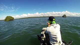 Moreton Bay - jew fish on kayak
