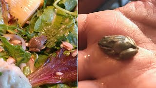 Baixar Woman Finds Tiny, Live Frog in Her Salad and Kept It as a Pet