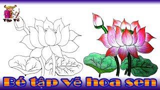 Bé tập vẽ Hoa sen theo mẫu | draw lotus flower