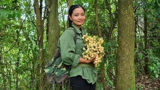 Tìm mật ong hoang dã và thu hoạch trái cây trong rừng