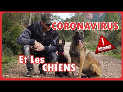 CORONAVIRUS CONFINEMENT AVEC LES CHIENS