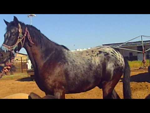 Front Feet- Horse Rescue