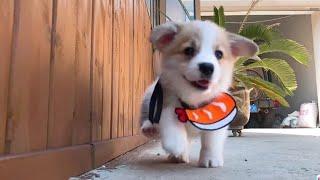 Cún con siêu quậy và đáng yêu #1 | Yêu Pets