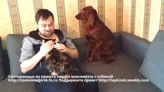 Удочеренные из приюта кошки знакомятся с собакой | cats meet dog | счастье в доме