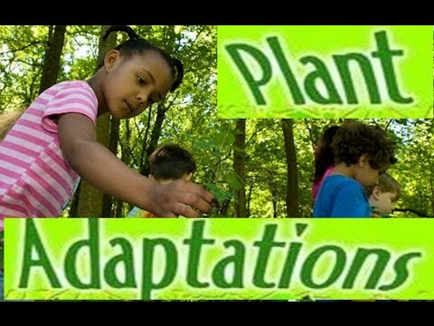 Adaptations in Plants -Video lesson for Kids - YouTube