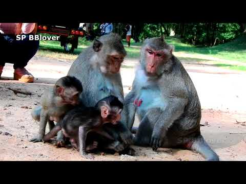 Baby Tarzanna On The Gate Of Angkor Thom from YouTube · Duration:  10 minutes 46 seconds
