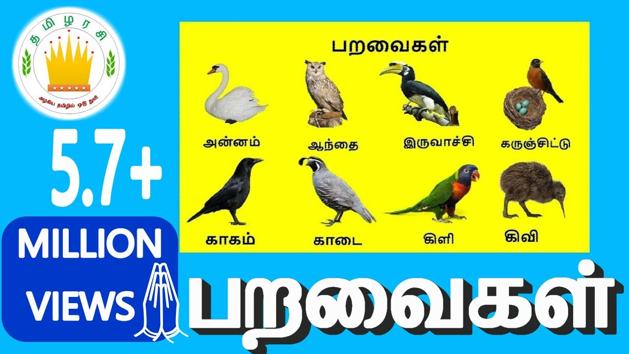 பறவைகள் | Learn Tamil Birds Name video for Kids and Children