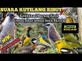 Suara Pikat Burung Kecil Kombinasi Kutilang Ribut Anti Zonk  Mp3 - Mp4 Download