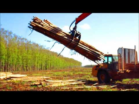 Timber Grabber loading Eucalyptus logs in South Africa