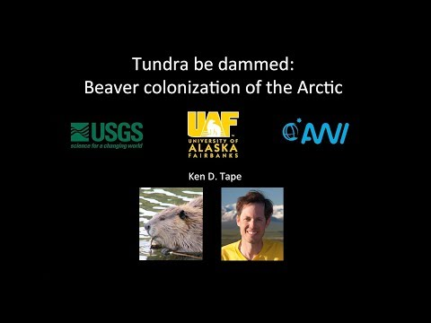 Tundra be Dammed: Beaver Colonization of the Arctic - Dr. Ken Tape - Science for Alaska