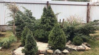 Моя любимая Дача 20.04.2019 г. Навели  порядок на участке. Перекопали деревья и кусты с удобрением.