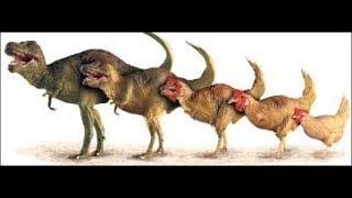 ¿¿cual es el animal mas cercano del T-REX??