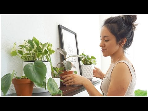 INDOOR PLANT STYLING | HOW TO DECORATE WITH PLANTS