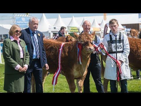 Limousin Judging at Balmoral show 2018 - May 16th 2018