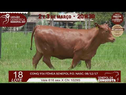 LOTE 18 CONQ 956