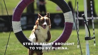 Incredible HoopJumping Dog