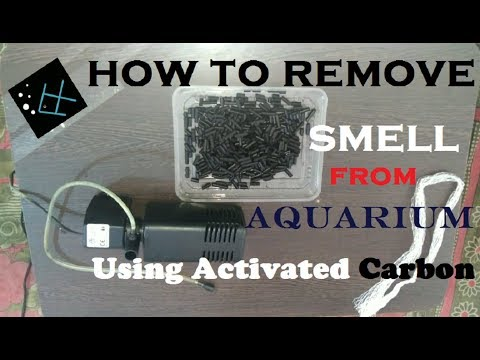 HOW TO REMOVE SMELL FROM YOUR AQUARIUM