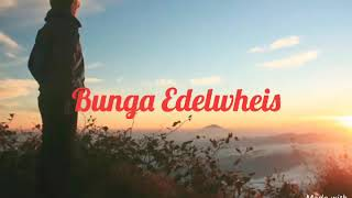 Download Video Bunga Edelweis - Thomas Arya MP3 3GP MP4
