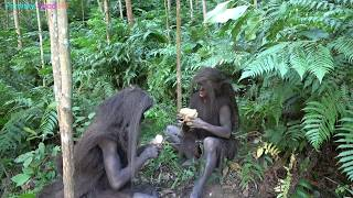 Primitive Life - Forest People meet ethnic girl grilling potatoes in the forest