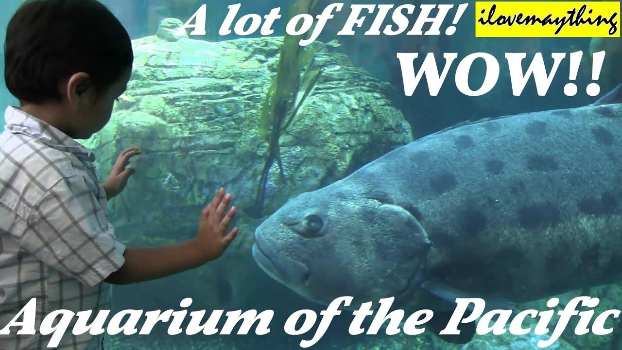 Fish in big aquarium - A Lot Of Fish In The Big Aquarium Aquarium Of The Pacific