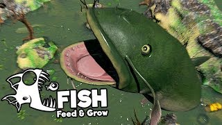 Feed and Grow Fish Gameplay German - New Catfish Level 1000