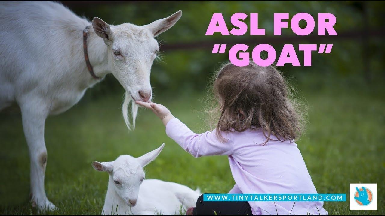 Goat Baby Sign Language Asl Portland Oregon Youtube