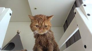 목욕하다가 2층 침대로 도망간 고양이