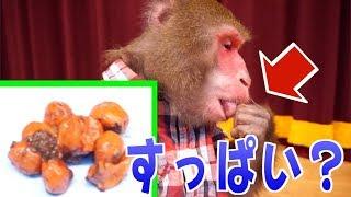 はじめて「梅干し」を食べたお猿さんの様子をご覧ください…。 thumbnail