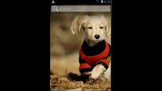 Dogs Wallpapers | Собаки Обои