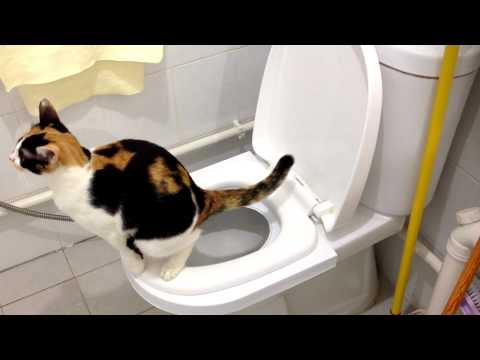 Sierra's 2nd month on the CitiKitty Cat Toilet Training Kit. Success!!!
