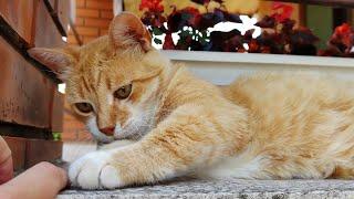 Cat Therapy: The Prescription for Stress