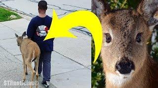 La gente notó que este niño caminaba con un ciervo todos los días. Luego miraron los ojos del animal