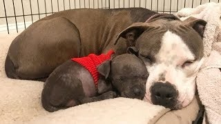 This Mother Dog Was Heartbroken After Losing All Her Babies - Until She Met A Puppy