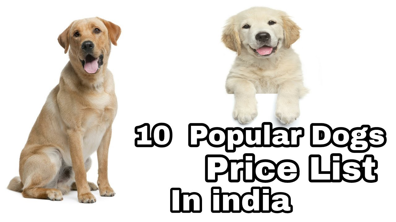 10 Dogs Price List In India Price List Of Dog Aryan Dog Club