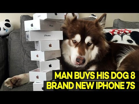 Chinese Billionaire's Son Buys His DOG 8 Brand New iPhone 7s