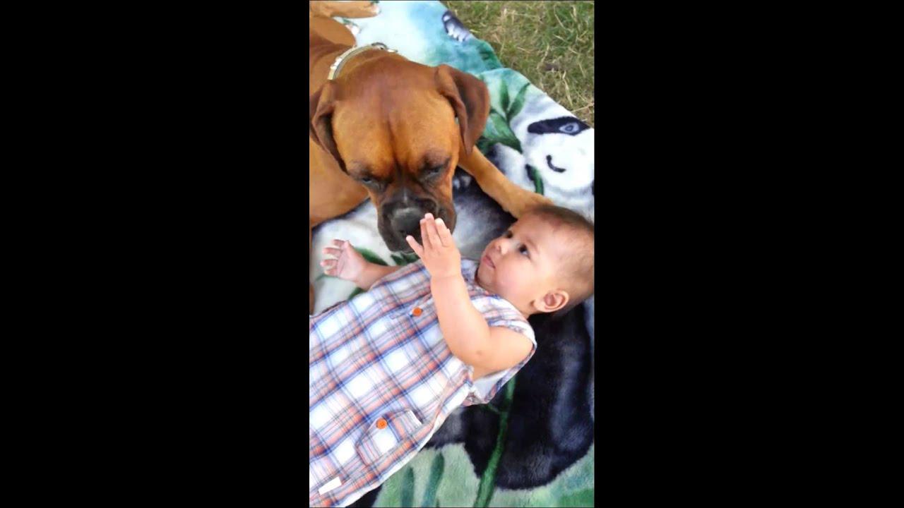 Préférence Un chien boxer embrasse un joli bébé - YouTube VS96