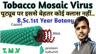 TMV | Tobacco Mosaic Virus | B.Sc. 1st year botany | by Prahalad sir