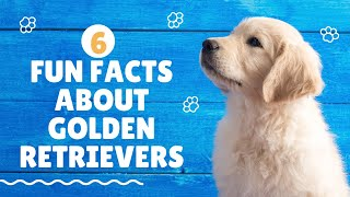 6 Fun Facts About Golden Retrievers