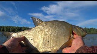 ЛЕЩ ВЫБИРАЕТ ЭТУ ОСНАСТКУ Рыбалка на леща 2021 Рыбалка на Оке