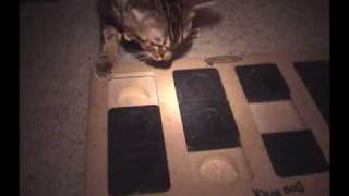 Learning Curve - Bengal Cat Intelligence