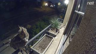 S6   10.2.17   A  Brief Nest Visit