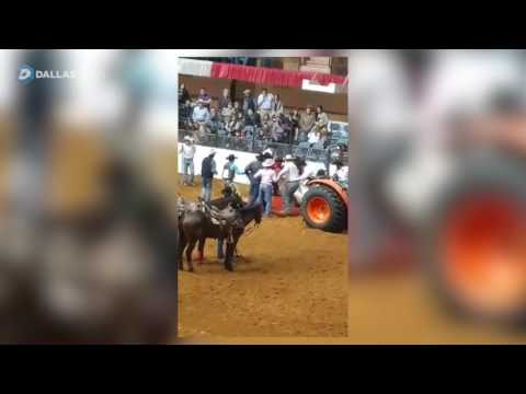 Bucking horse dies at Fort Worth Stock Show and Rodeo