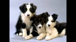 Ах, собаки... Любите собак, не бейте и не обижайте.