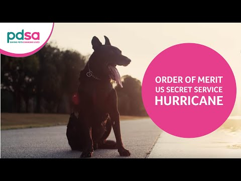 US Secret Service Special Operations Canine Hurricane Is Awarded PDSA Order Of Merit