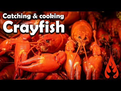 Catching And Cooking Crayfish!