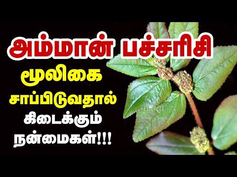 அம்மான் பச்சரிசி மூலிகை மருத்துவ பயன்கள்   Herb   Euphorbia hirta   Amman pacharisi   Health Tips
